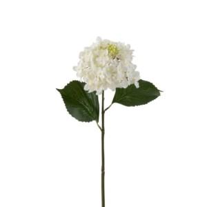 Fleur Hortensia blanc