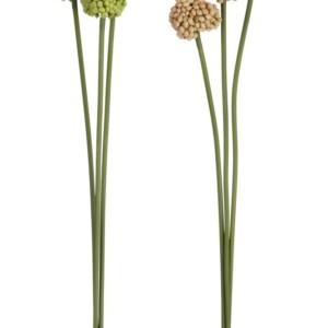 Fleur Dianthus