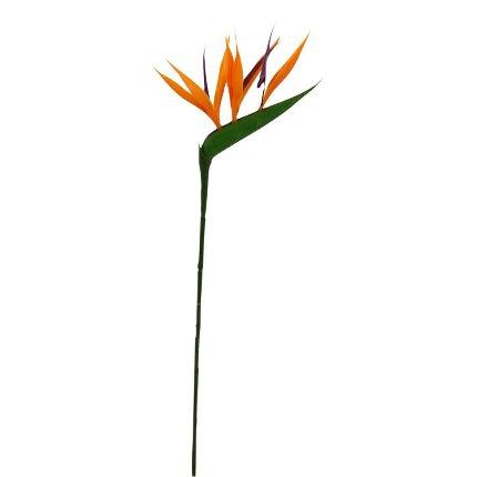Fleurs exotique